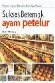 Sukses Beternak Ayam Petelur