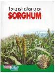 Budidaya Sorghum